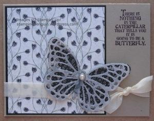 ButterflyPlum